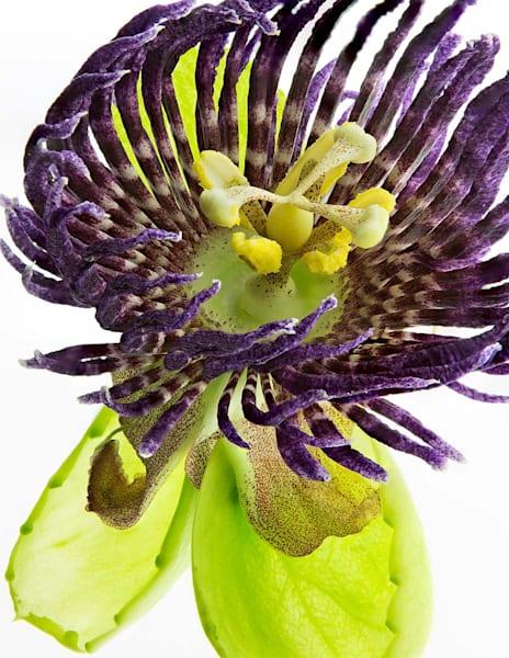 Lilikoi Bloom