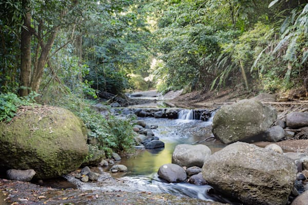 Into the forest-a St Lucia rain forest stream