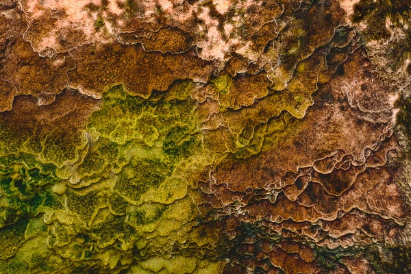 Mammoth Hot Springs Abstract