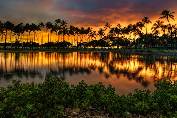 Hawaii Photography | Palm Trees of Ala Moana by Peter Tang