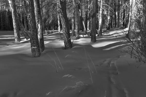 Woods in snow. Banff National Park|Canadian Rockies|Rocky Mountains|