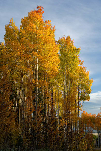 Painted Aspens Art | Casey Chinn Photography LLC