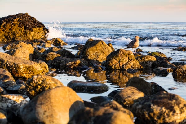 Seabird On The Rocks At Leo Carrillo State Park Photograph For Sale As Fine Art