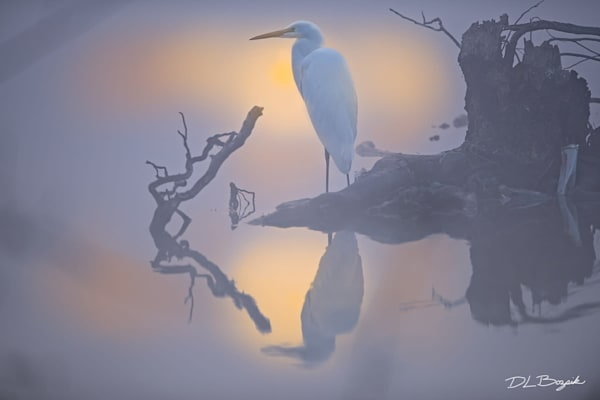 Great Egret and Golden Glow