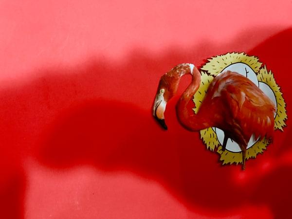 Odeta Xheka Visuals | Beautiful ostrich red art canvas prints