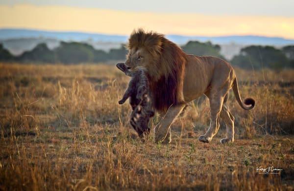 Predator Vs Scavenger Photography Art | Images2Impact