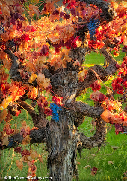 Autumn Harvest Napa