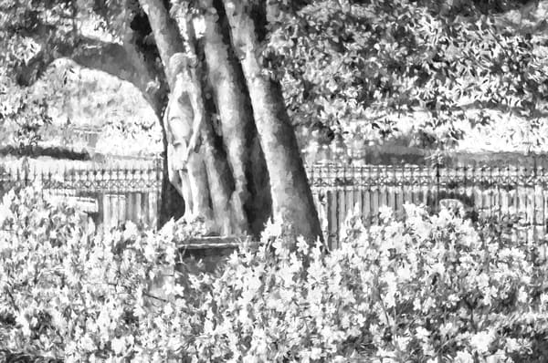 Azaleas In Jackson Square New Orleans BW