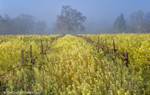 Spring Glow Napa Valley Art | The Carmel Gallery