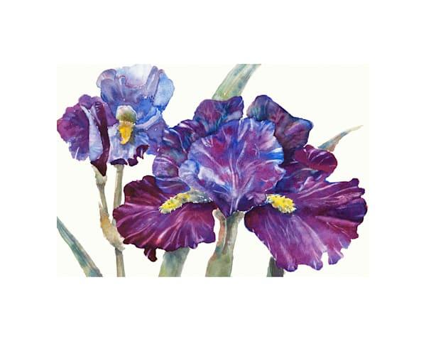 8x10 Purple Iris On Paper | HFA print gallery