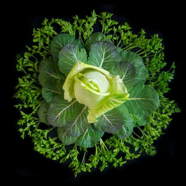 Cabbage, Collard Greens and Italian Parsley Mandala