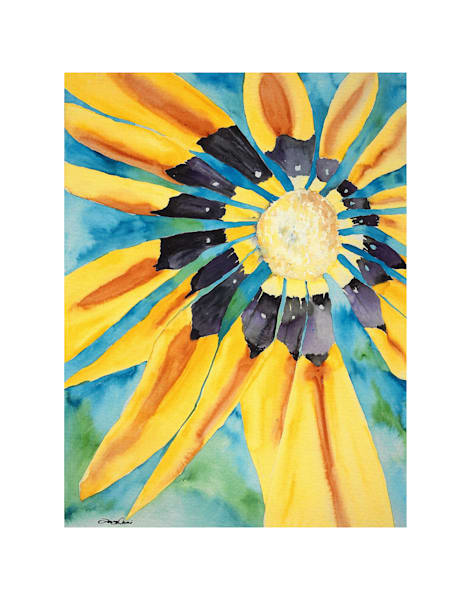 11x14 Sunflower | HFA print gallery