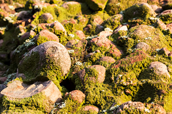 Lichen and Algae Covered Rocks In Santa Monica Mountains Photograph For Sale As Fine Art