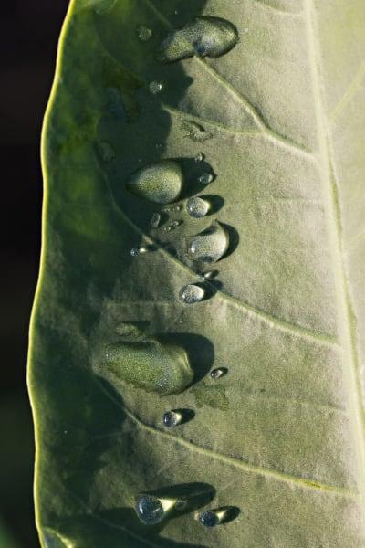Rain Drops On Leaf Photograph For Sale As Fine Art