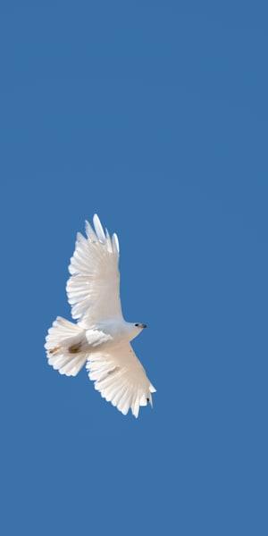 Purity in Flight II