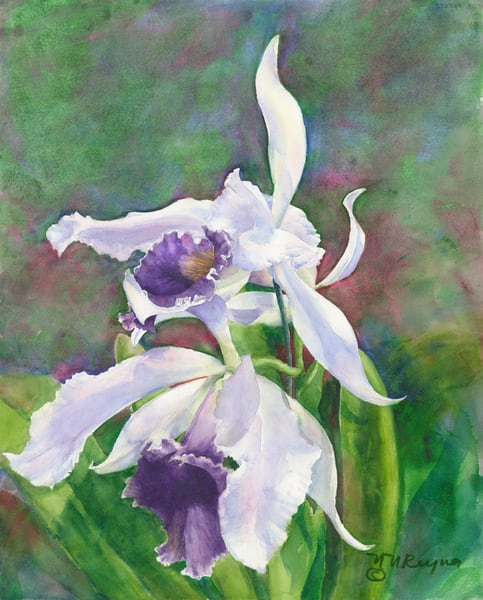 Lovely Laelia Art for Sale