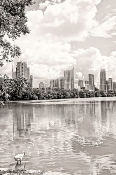 A Duck and An Austin Skyline, BW DSC4617BW