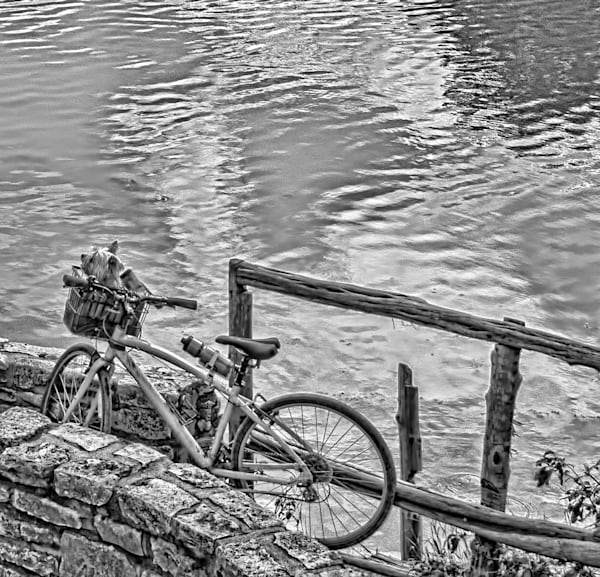 Neff Point Dog in Bicycle basket BW