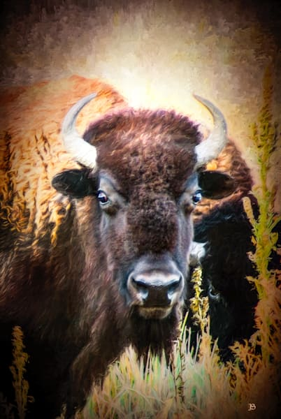 Bison Number 5 Portrait.