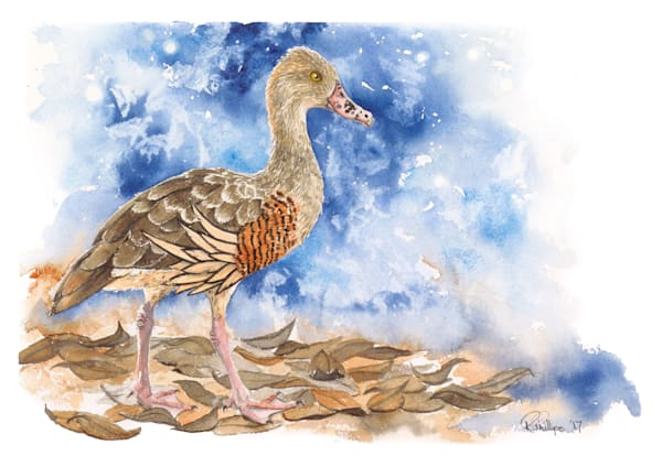 R-PHILLIPS 009 Plumed-Whistling-Duck