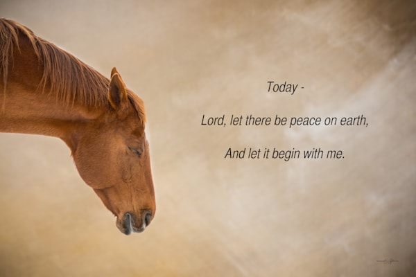 Horses, inspirational quotes