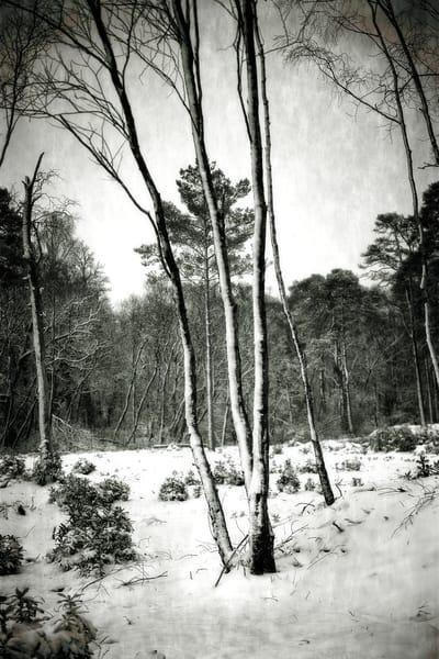 Trees Art | Roy Fraser Photographer
