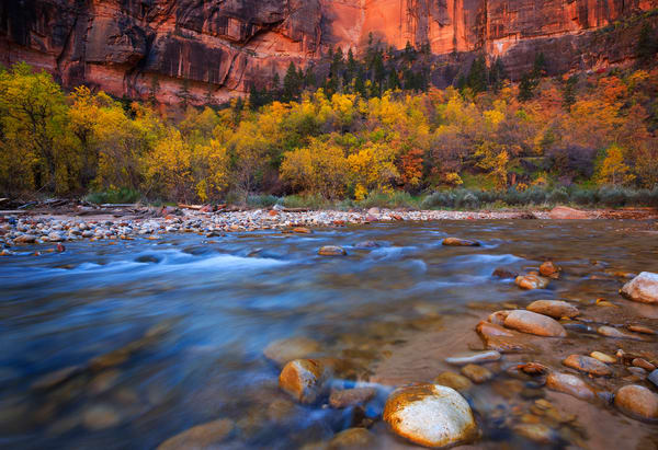 Autumn Zion Canyon Art Prints