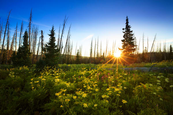 Cedar Breaks Wildflowers Sunrise Art Prints
