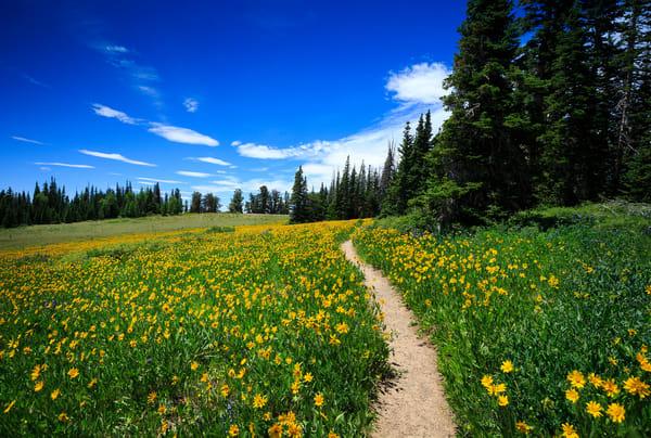 Cedar Breaks Wildflower Landscape Art Prints