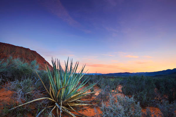Kayenta Desert Sunset Art Prints