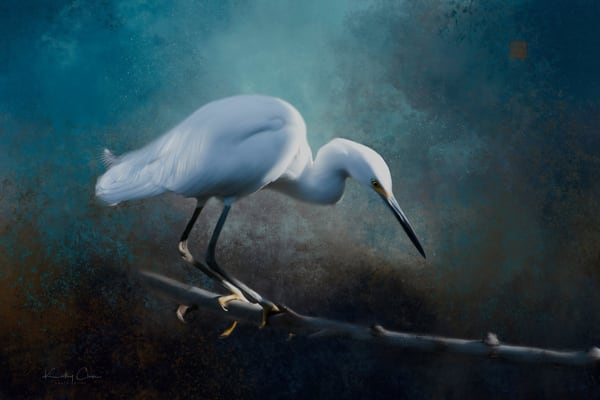 Snowy Egret on Branch