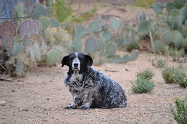 Photograph of a dog and cactus for sale as Fine Art