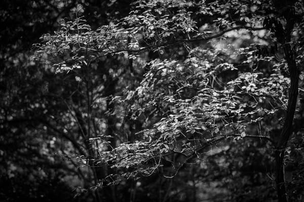Leaves  25 Photography Art | Sandy Adams Outdoorvizions Photography