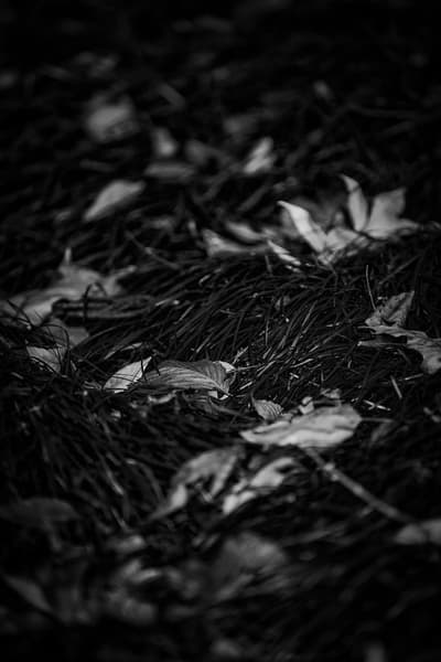Leaves  30 Photography Art | Sandy Adams Outdoorvizions Photography