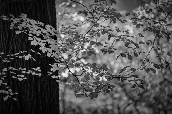 Leaves  27 Photography Art | Sandy Adams Outdoorvizions Photography