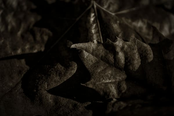Leaves  72 Photography Art | Sandy Adams Outdoorvizions Photography