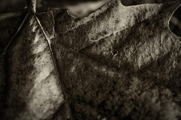 Leaves  69 Photography Art | Sandy Adams Outdoorvizions Photography