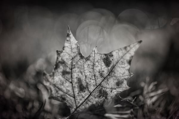 Leaves  77 Photography Art | Sandy Adams Outdoorvizions Photography