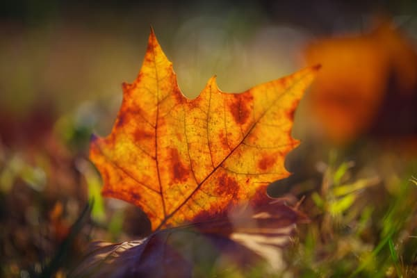 Leaves  76 Photography Art | Sandy Adams Outdoorvizions Photography