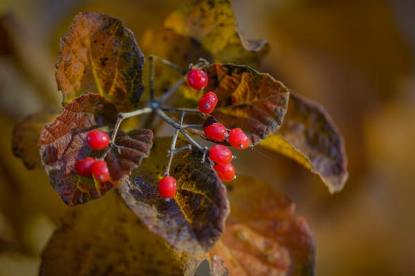 Leaves  79 Photography Art | Sandy Adams Outdoorvizions Photography