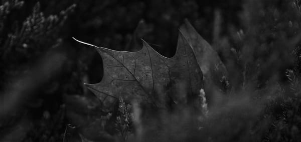 Leaves  81 Photography Art | Sandy Adams Outdoorvizions Photography