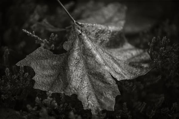 Leaves  80 Photography Art | Sandy Adams Outdoorvizions Photography