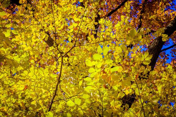 leaves-0888