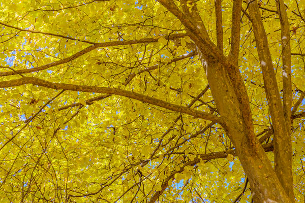 leaves-0895
