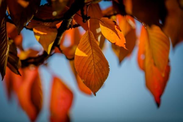 leaves-9793