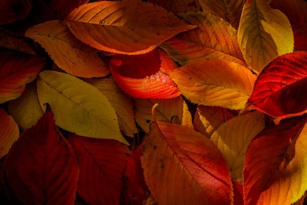 leaves-9768