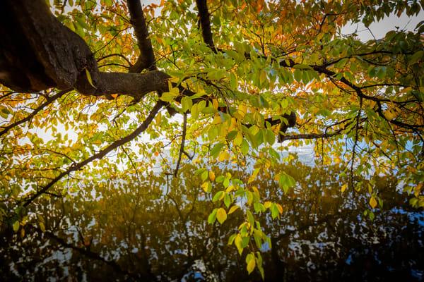 leaves-9684