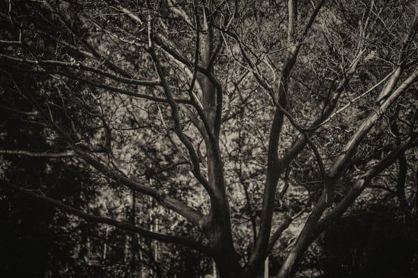 trees--33