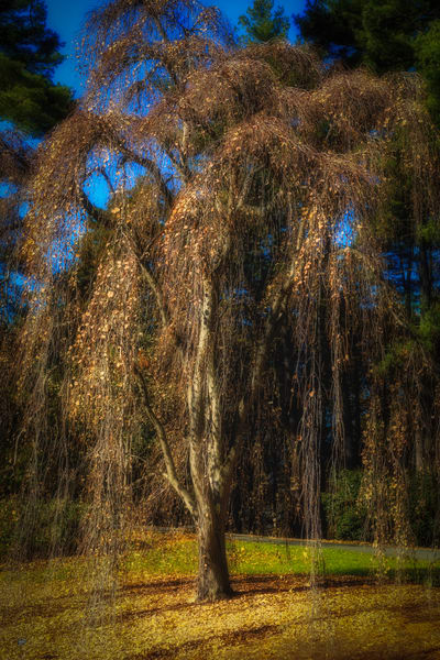 Trees  36 Photography Art by Sandy Adams Outdoorvizions Photography