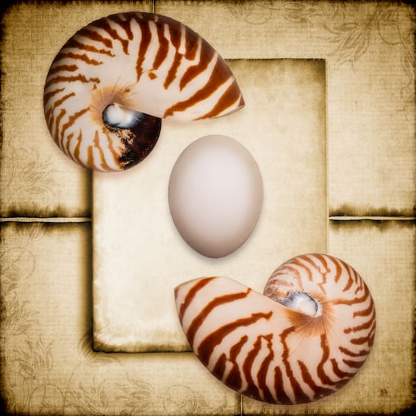 Egg, Shell Two print